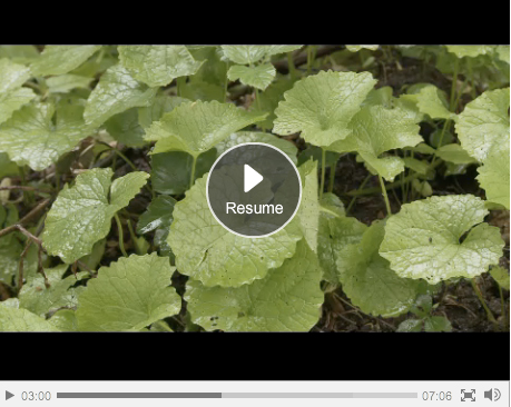 Guardian food and foraging video